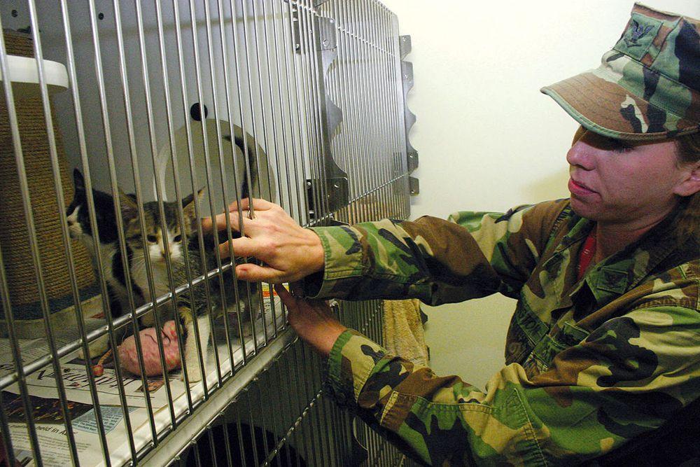 В 1960-х годах ЦРУ развивало проект «Акустическая кошка». Один из сотрудников предложил вживить кошкам микрофоны и миниатюрные радиопередатчики. Потом котов-шпионов планировали запустить в советские посольства за рубежом. Программа разрабатывалась в течение пяти лет.