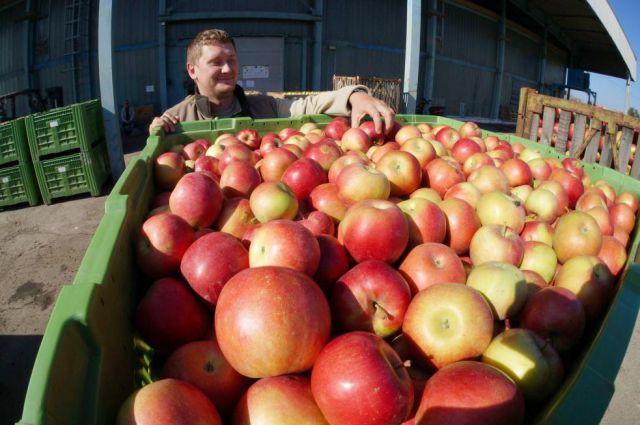 В этот день принято освящать яблоки