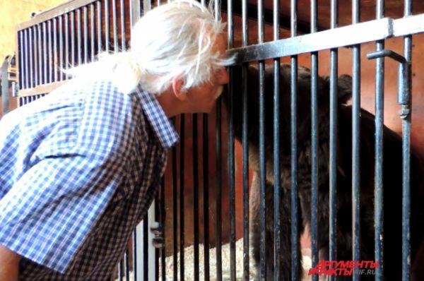 Медведь Егор целует дрессировщика.