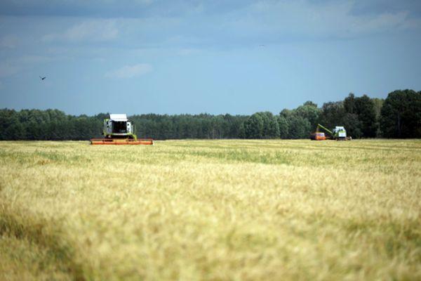 Уборка урожая ячменя в Белоярском районе Свердловской области.