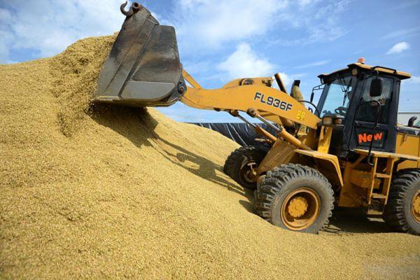 Плющение зерна во время уборки урожая зерновых культур в Белоярском районе Свердловской области.