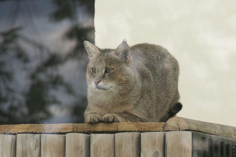 Оказывается, у котов очень выразительная мимика