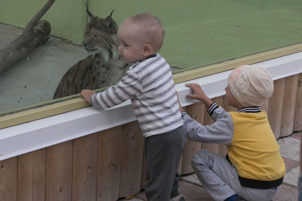 Маааам, возьмем котеночка!