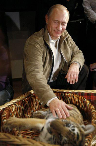 10 октября 2008 года. Владимир Путин познакомил журналистов с тигренком, которого ему подарили на день рождения 7 октября.