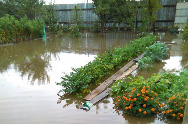 Весь урожай - под водой.