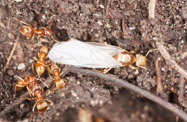 70476ce70 Царицы, свита, няньки и рабочие. Как устроен муравейник | Огород ...
