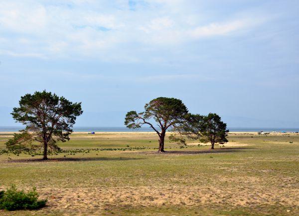 Деревья на берегу.