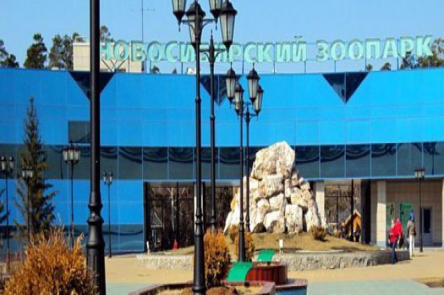В Новосибирском зоопарке в фонтане позеленела вода