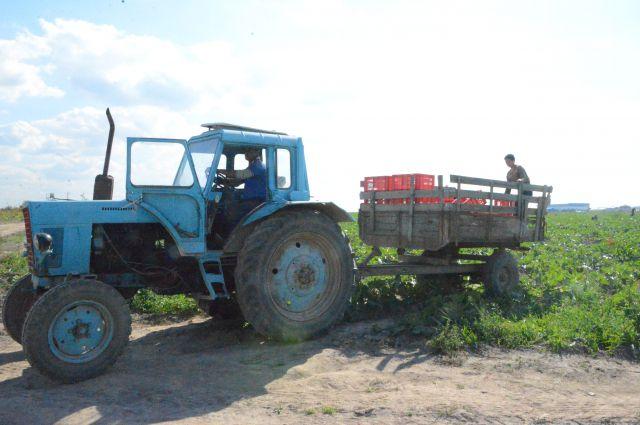 12 часов длится  рабочий день фермера.