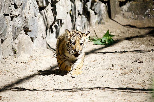 Теперь за животными в новосибирском зоопарке можно наблюдать онлайн