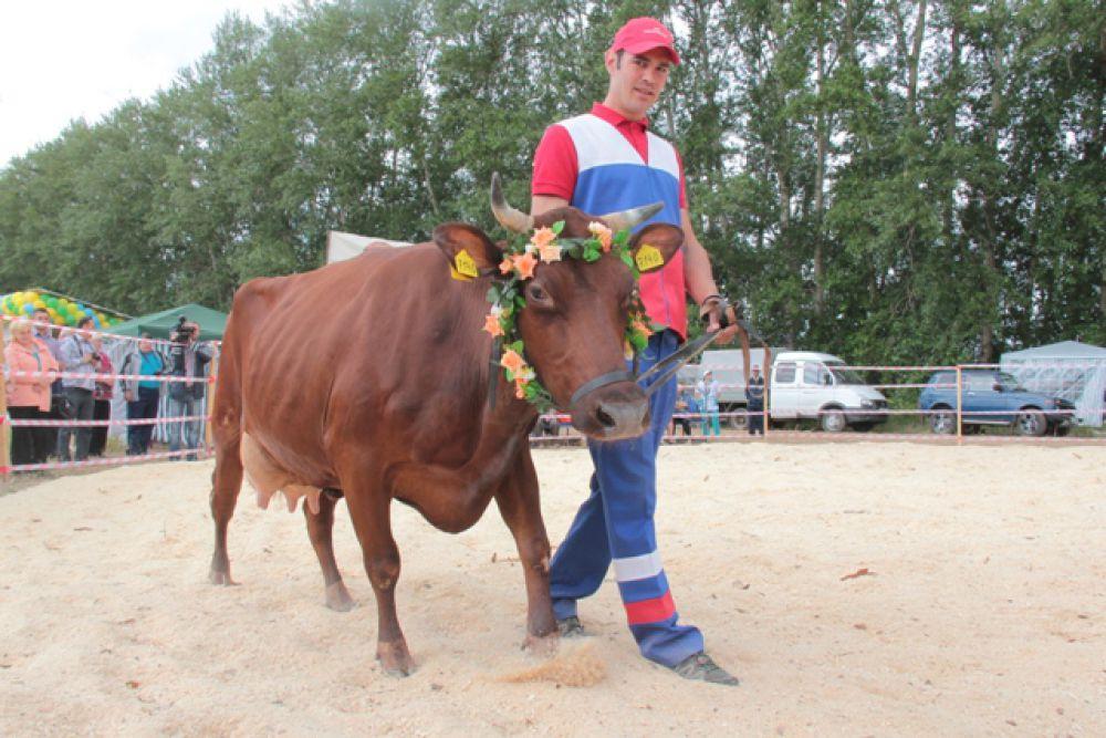 Рязанская область. Конкурс красоты среди коров