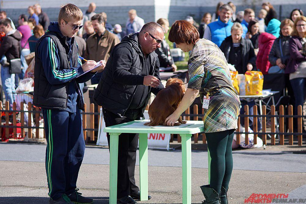 Собачьи ринги шли в течение всего дня работы выставки.