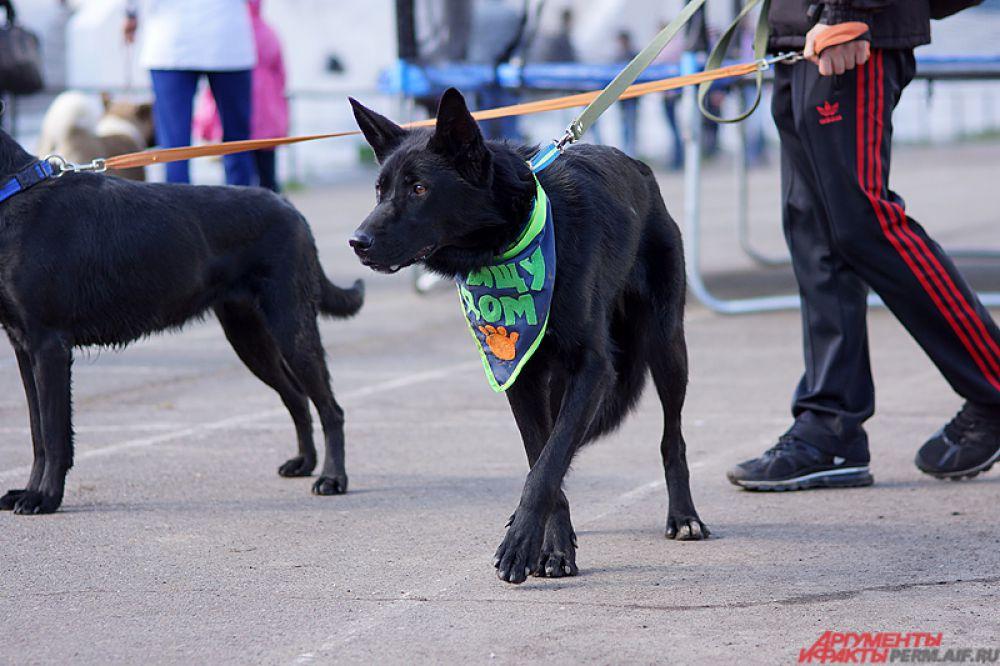 Организаторами в этот раз выступили две организации - приют «Доброе сердце» и региональная федерация спортивно-прикладного собаководства.