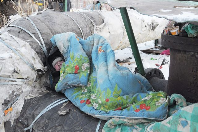 По воскресеньям в Екатеринбурге будут бесплатно кормить бездомных