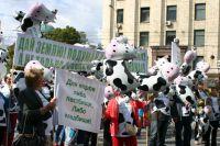 5000 коров могут пойти под нож.