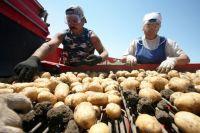 Основная проблема фермеров - сбыт.