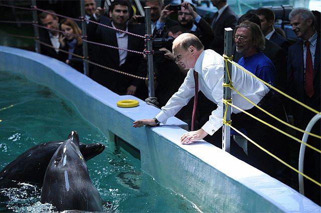 К визиту президента готовятся и в Приморском океанариуме.