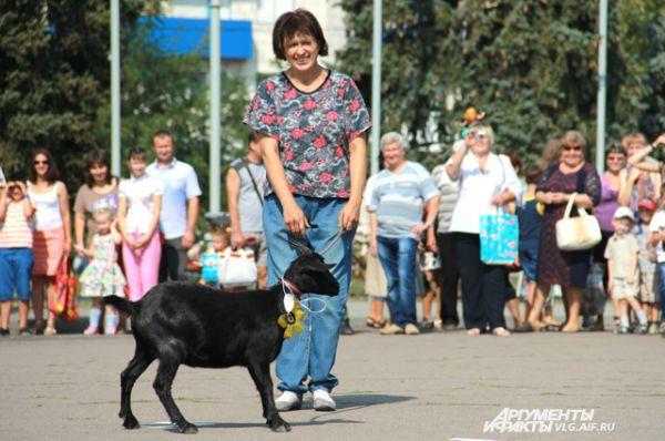 Самой молодой участнице конкурса, пуховой козе Милане, 5 месяцев. Ее хозяйка Нина Милосердова.