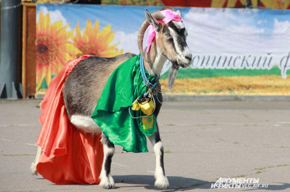 Зуля на конкурсе костюмов.