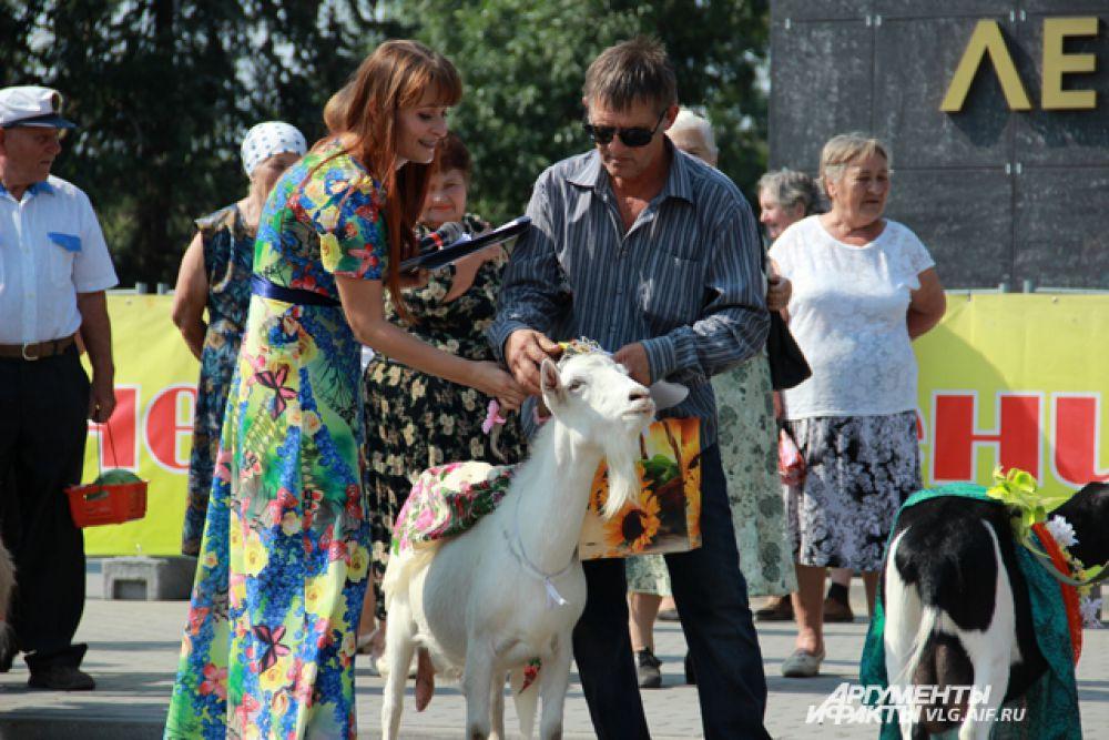 Ведущая надевает корону победительнице конкурса - козе Белке.