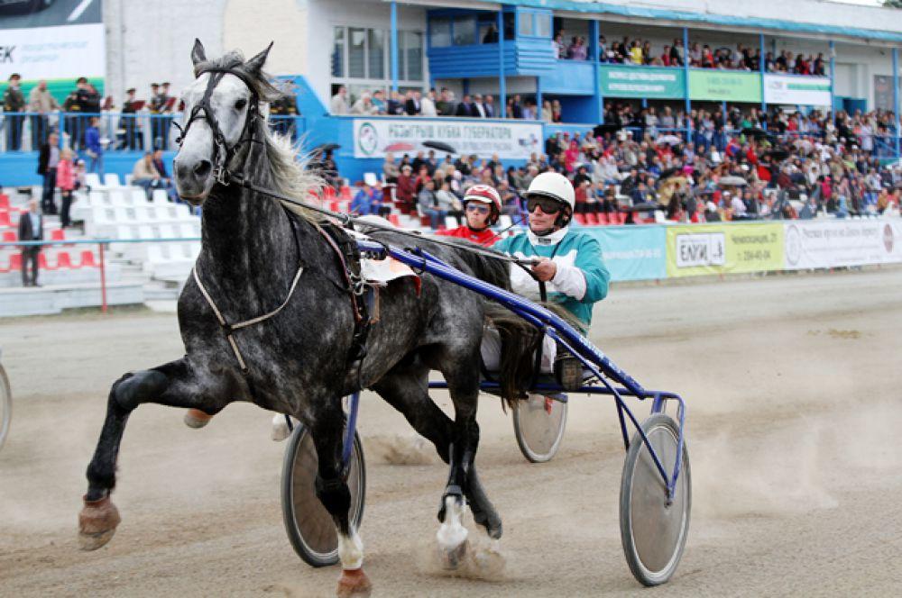 Эта старейшая порода лошадей по праву считается символом России.