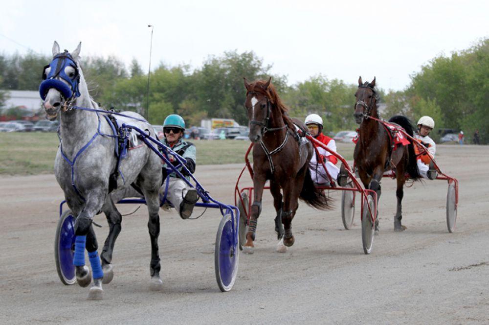 Отдельным событием в рамках прошедшего конно-спортивного праздника был Всероссийский фестиваль орловского рысака.