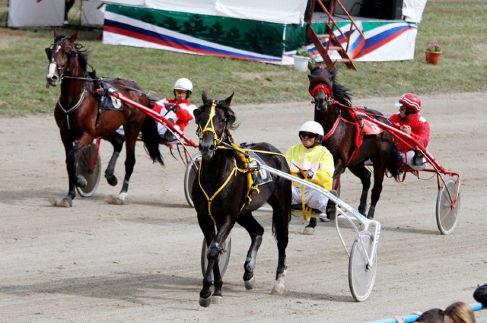 Один из самых важных факторов успеха всадника на конно-спортивных соревнованиях...