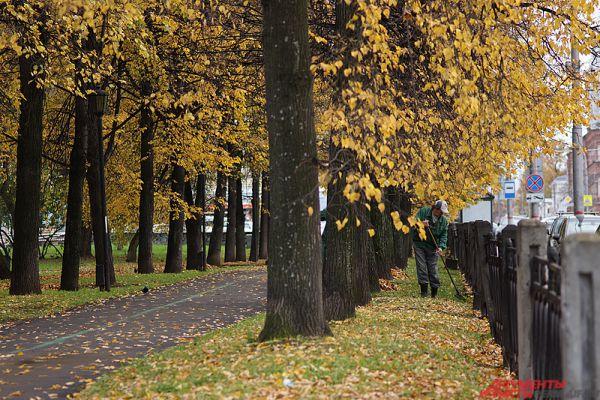 А в социальных сетях люди призывают чиновников пока не убирать листья в аллее. Для красоты, уверяют пользователи.