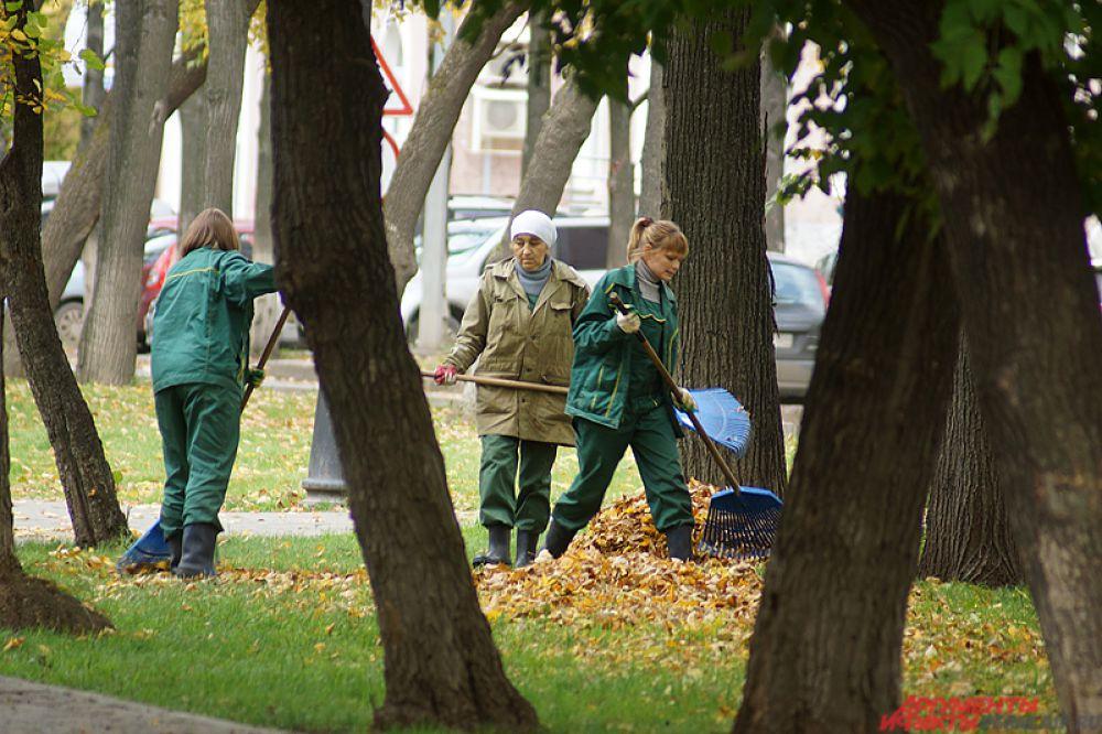 Дворники ежедневно чистят тротуары от многочисленной листвы.