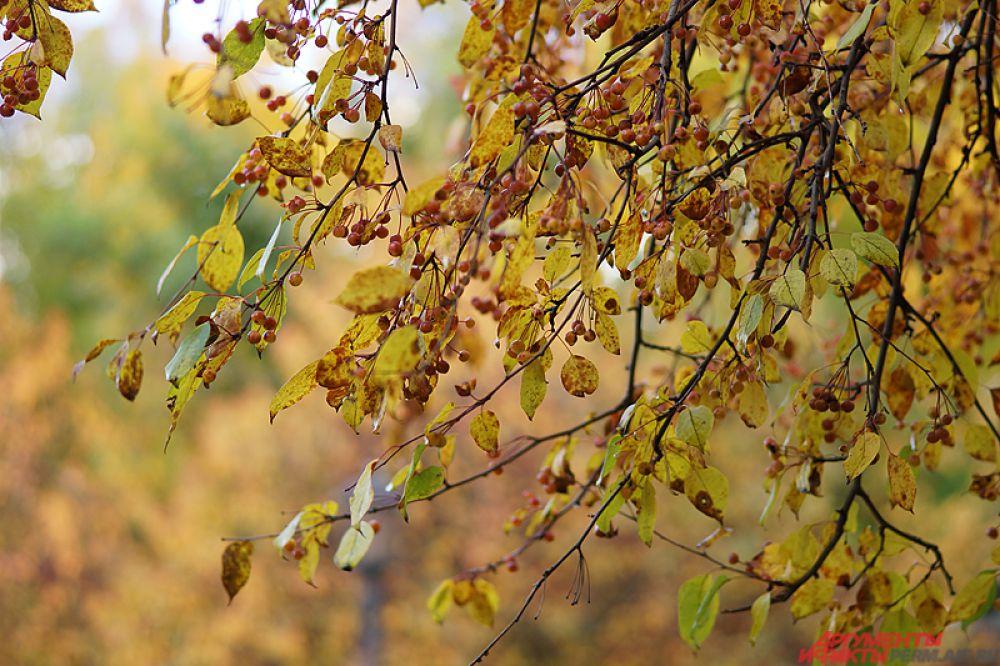 Золотая листва украшает деревья.