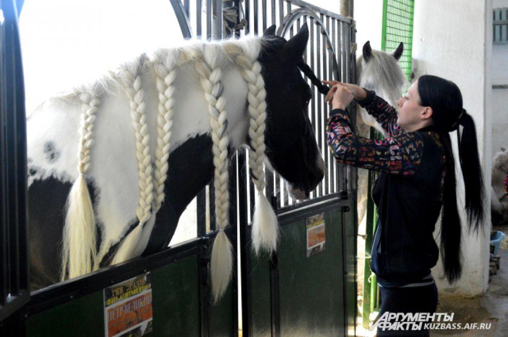 За гривой этой лошади тщательно ухаживают и регулярно плетут косы.