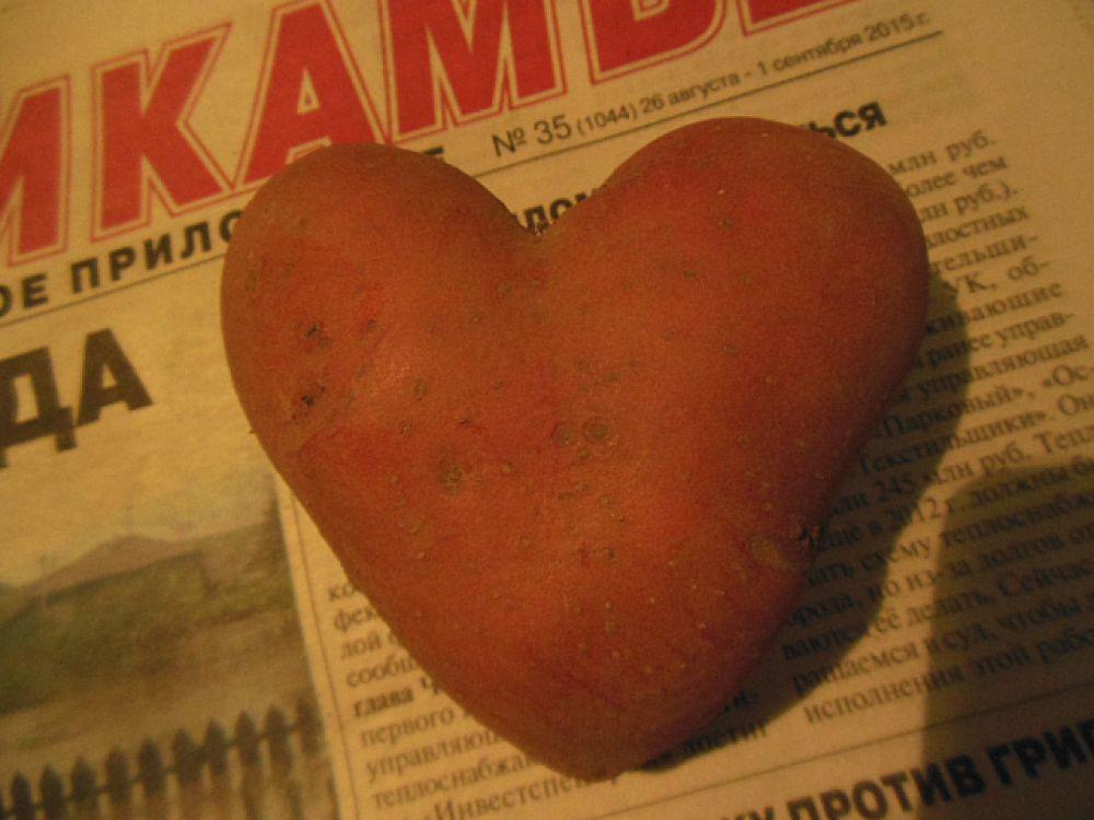 Лариса Мартюшева: «Картофельное сердце выросло у нас в огороде».