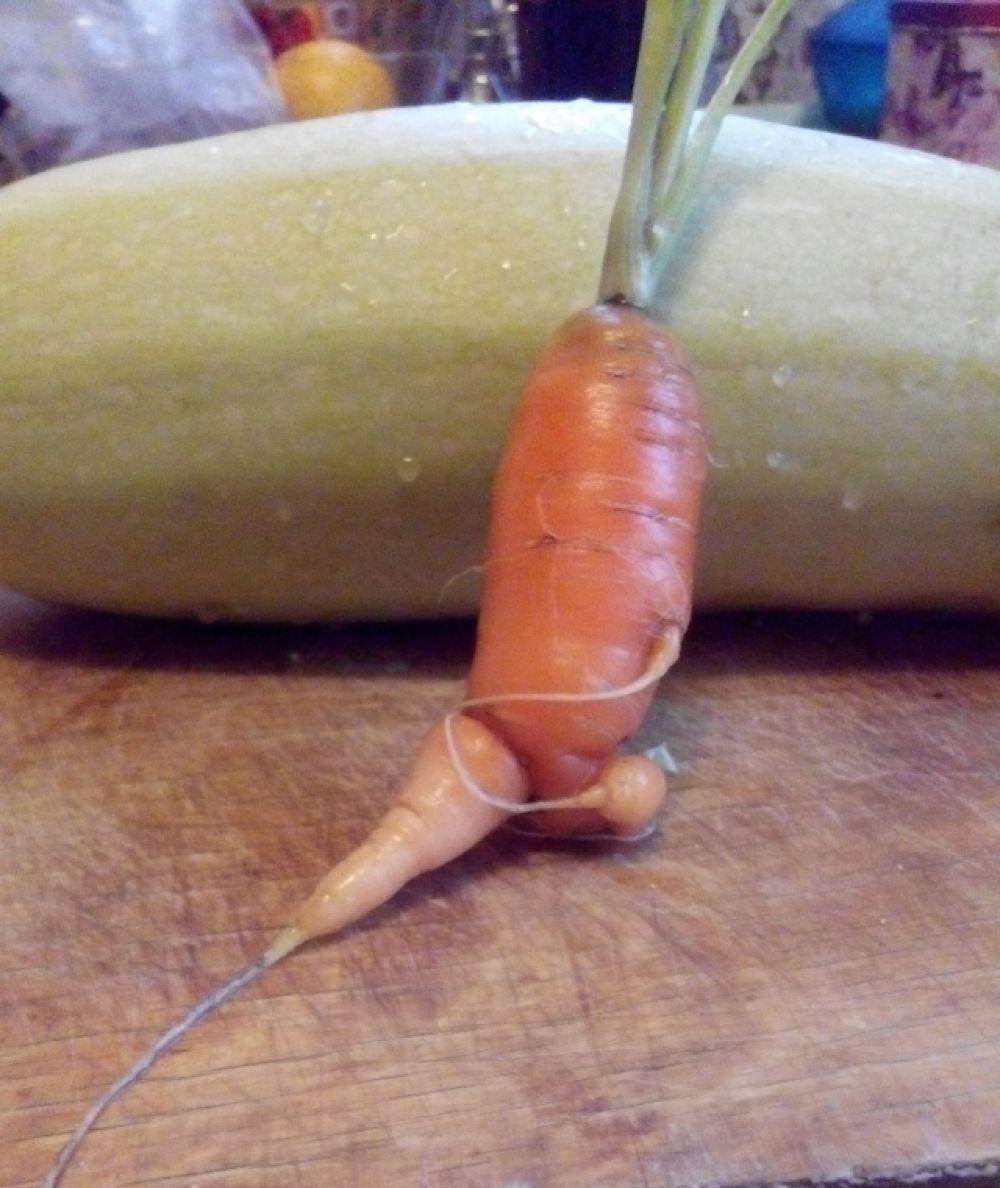 Эти овощи вырастила Ковтун Анна, учительница на своем участке неподалеку от деревни Болгары