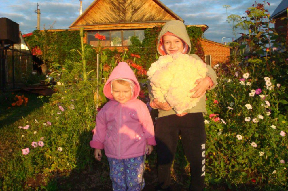 Антон Юдин: «Кочан цветной капусты, выращенный на своем огороде. Вес 12 кг»