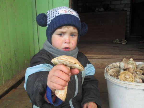 Семья Чащухиных: «23 августа мы ездили в лес за грибами вблизи д. Горшки. Места у нас урожайные на грибы и ягоды. В лесу мы собрали богатый урожай грибов. Даже наш Лева и тот собирал грибы»