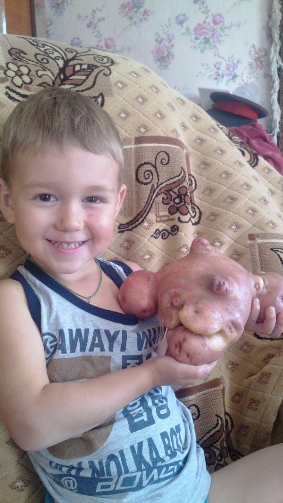 «На нашем огороде вырос вот такой картофель-старичок! Внук Ванюшка очень рад такому «деду»!