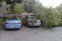 Дерево упало о тсильных порывов ветра.