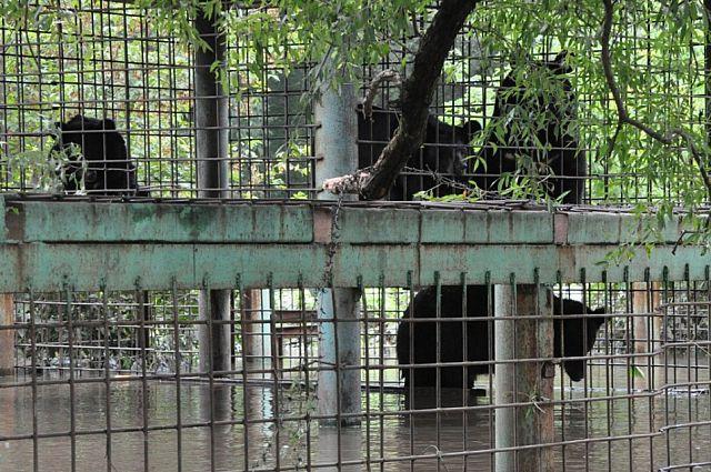 Эти медведи дождались помощи.