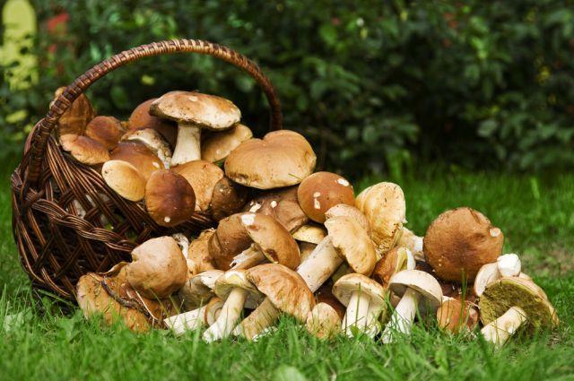 Жарим грибочки: все о том, как жарить грибы / Простые