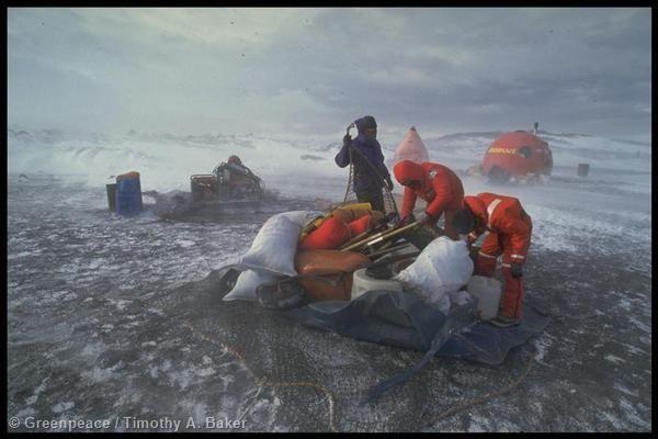После долгой кампании Гринпис Антарктида была признана природным заповедником, предназначенным для мира и науки. На фотографии – развертывание базы международного природного парка. В то время Новая Зеландия и США в местах гнездования пингвинов вели строительные и взрывные работы.