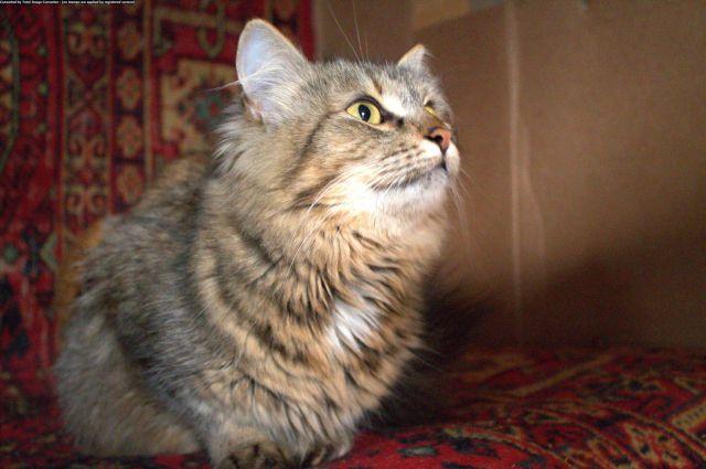 Волонтёры спасли кошек в Новосибирске