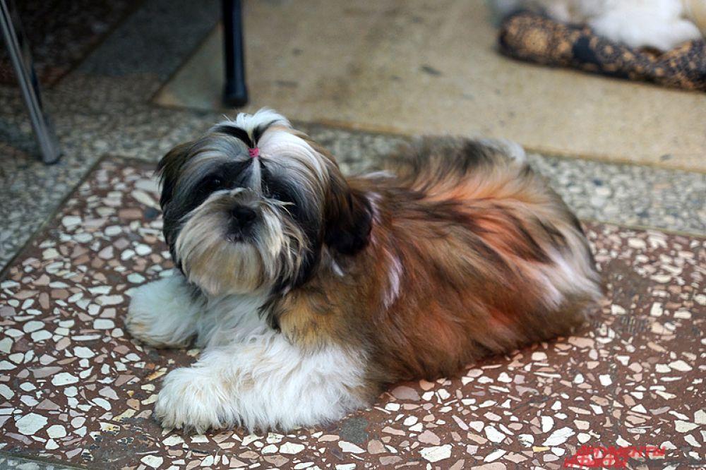 В Перми открылась масштабная выставка собак.