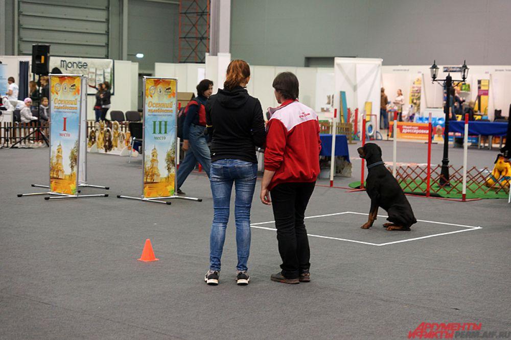 На отдельных площадках проходят турниры по преодолению препятствий на время, прыжки в высоту среди питомцев, танцы и состязания по перетаскиванию грузов собаками.