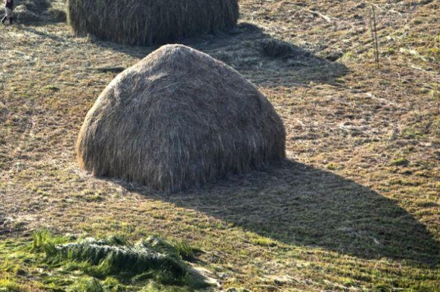 Житель новосибирской области отдал долг сеном