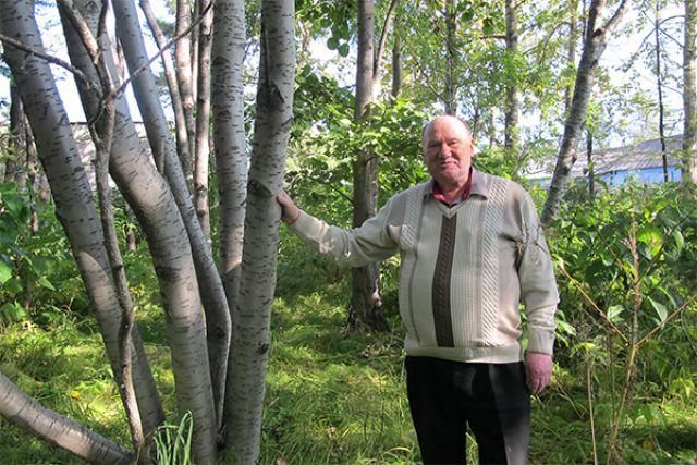 Деревьям в Елизовском дендропарке ничто не угрожает.