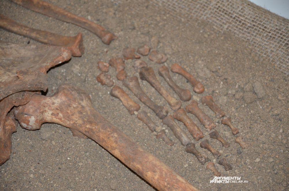 """Кости """"яйцелоговой"""" женщины, предположительно II-III веков н.э."""