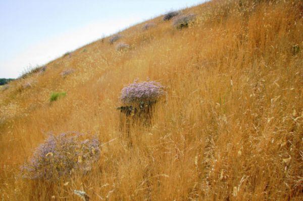 Возможно раньше этот холм покрывали синие степные цветы, отсюда и название  - Синий.