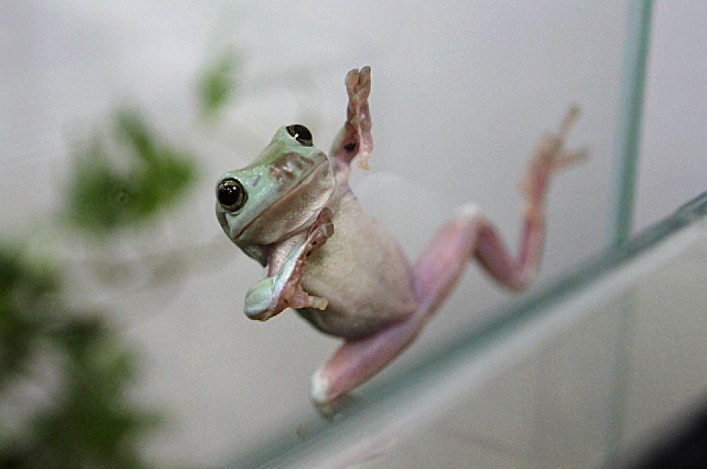Эта милая лягушечка - просто воплощение позитива и тепла.