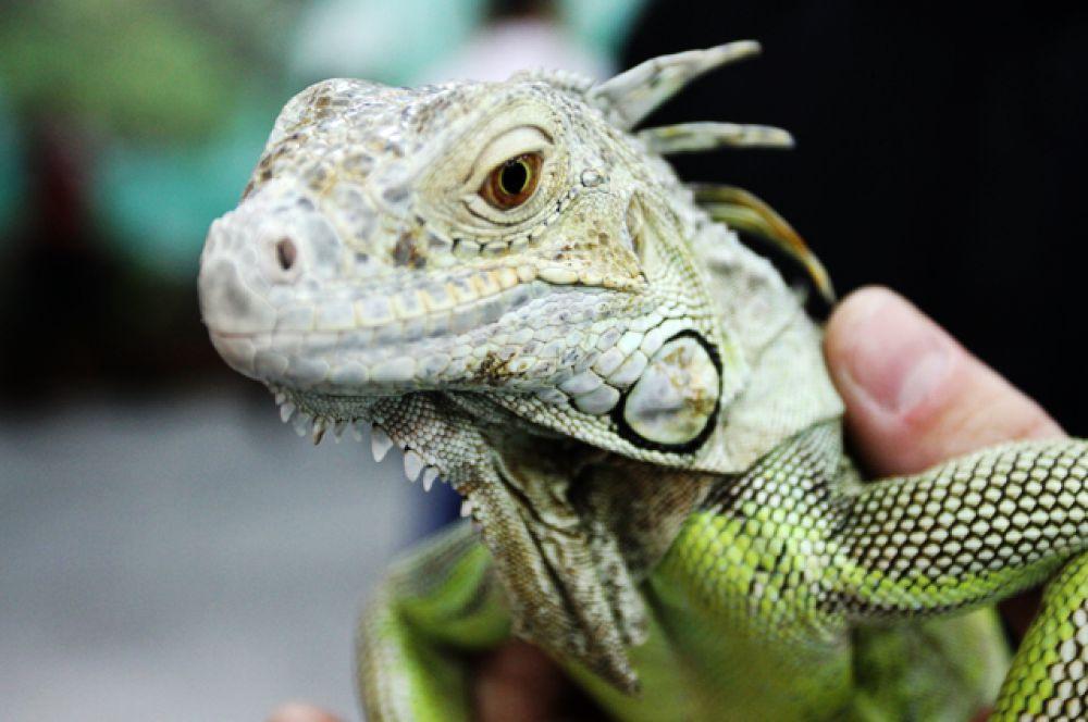 У каждого животного, будь то рептилия или млекопитающее, есть душа. Берегите зверей!