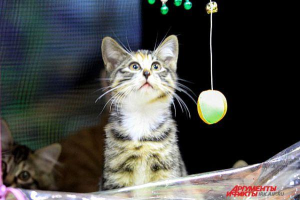 «Опять мячик? Когда же мышка?»